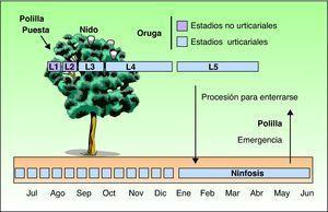 Ciclo biológico anual de la polilla procesionaria del pino (Thaumetopoea pityocampa).