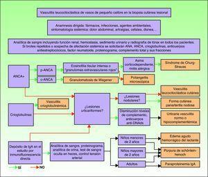 Algoritmo diagnóstico de las vasculitis cutáneas.