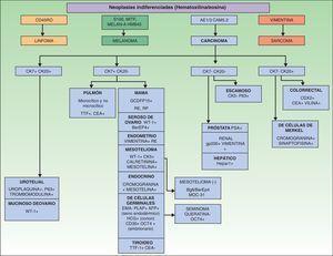 Algoritmo diagnóstico de las metástasis cutáneas indiferenciadas, en función de los marcadores inmunohistoquímicos.