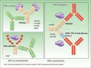 Clasificación de de los anticuerpos antifármaco en función de su mecanismo de acción.