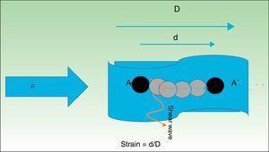 Al comprimir un tejido con una fuerza F, sus partículas (A) sufren un desplazamiento (A??). El cociente entre el desplazamiento de la estructura en estudio (d) y la longitud total inicial D es lo que se denomina strain. Perpendicularmente a esta onda de presión, se produce un desplazamiento de las partículas que genera unas ondas denominadas shear wave u ondas de cizallamiento.