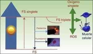 Mecanismo de acción de la TFD; la absorción de luz por un fotosensibilizador (FS) promueve un electrón a un orbital de mayor energía (FS-singlete) y a continuación este cambia la orientación de su momento angular de espín (FS-triplete). Su mayor vida del estado electrónico triplete favorece la formación de radicales libres y/u oxígeno singlete que dañan estructuras claves de la célula y finalmente causan su muerte.