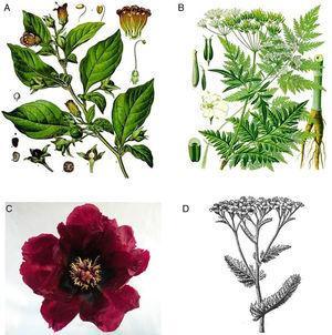 a. Atropa belladona; b. Anthriscus silvestris; c. Flor de Paeonia rockii; d. Achillea millefollium.