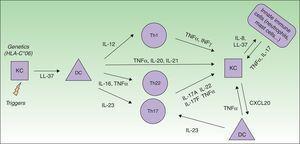 Immunopathogenesis model of psoriasis. DC, dendritic cell; KC, keratinocyte; Th, T helper cell.