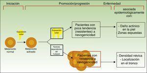 Vías para el desarrollo del melanoma de acuerdo a la exposición y a la predisposición del paciente. Fuente: modificada de Whiteman et al.12.