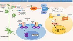 Fármacos moléculas pequeñas y dianas específicas en la patogenia de la dermatitis atópica. AC: adenylyl cyclase; AMPc: adenosín-monofosfato cíclico; ATP: adenosín trifosfato; CREB: cAMP response element-binging protein; DGLA: ácido dihomo-γ-linolénico; H4R: receptor de la histamina 4; IL: interleucina; JAK: Janus kinase; κOR: receptor κ-opioide; NF-κB: nuclear factor kappa-light-chain-enhancer of activated B cells; NFAT: nuclear factor of activated T-cells; NK-1R: receptor de la neuroquinina 1; PDE4: fosfodiesterasa 4; PGD1: prostaglandina D1; PGD2: prostaglandina D2; PGE1: prostaglandina E1; PKA: protein kinase A; STAT: signal transducer and activator of transcription; Th: (linfocito) T helper; TSLP: thymic stromal lymphopoietin; TYK: tyrosine-kinase.