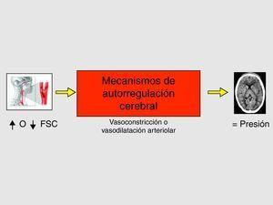 Mecanismos de autorregulación cerebral para el mantenimiento de la presión intracraneal en condiciones normales.