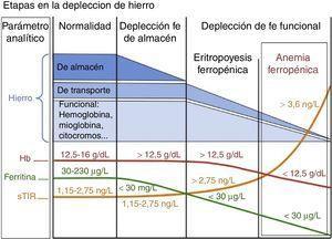 Estudio del metabolismo del hierro. Fe: hierro; Hb: hemoglobina; sTfR: receptor soluble de la transferrina.
