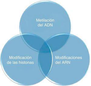 Interrelación de los procesos celulares que constituyen el código epigenético. En el cambio de la expresión genética, las modificaciones del ATN incluyen el RNA de interferencia y los micro-RNA.