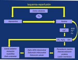 Fenómeno isquemia/reperfusión (F I/R); producción de radicales libres y daños que ocasionan.
