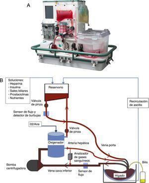 A) Máquina de perfusión normotérmica (MPN) OrganOx metra®. B) Esquema del funcionamiento de la MPN.