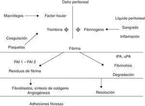 Fisiopatología de la formación de adherencias. PAI1:inhibidor del activador del plasminógeno-1; PAI2:inhibidor del activador del plasminógeno-2; tPA:activador tisular del plasminógeno; uPA:activador del plasminógeno tipo urocinasa.