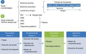 Modelo de certificación sanitaria de piel y tejidos. CMV: citomegalovirus; PCR: reacción en cadena de la polimerasa; VIH: virus de la inmunodeficiencia humana; VHB: virus de la hepatitis B; VHC: virus de la hepatitis C.