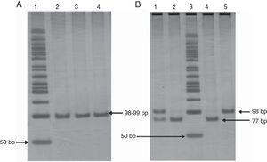 Panel A. Polyacrylamide gel electrophoresis showing polymerase chain reaction amplification of 99 pb fragment of -675 4G/5G polymorphism. Lane 1: 50bp DNA ladder; lanes 2, 3, and 4 PCR product 98-99bp. Panel B. Polyacrylamide gel electrophoresis showing pattern restriction of -675 4G/5G polymorphism. Lane 1: 4G/5G genotype; lanes 2 and 4: 5G/5G genotype; lane 3: 50bp DNA ladder; lane 5: 4G/4G genotype.