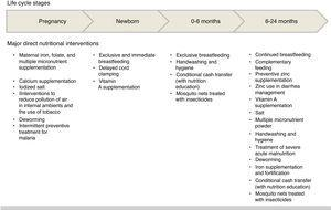 Nutritional interventions, according to life cycle stages, throughout the 1000 days.