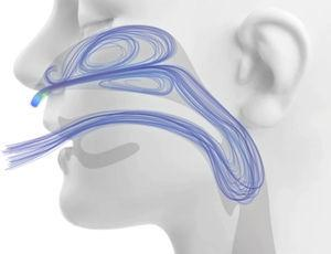 Computational fluid dynamics modeling of extrathoracic airway flush during high flow nasal cannula support. Image courtesy of Thomas L. Miller, PhD.