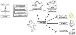 Exercise may act in specific vulnerabilities that IUGR individuals have, such as their increased risk for type II diabetes and adiposity, as well as hypothalamus–pituitary–axis (HPA) dysfunction. Moreover, exercise acts in several brain areas and processes, such as increasing neurogenesis and neuroplasticity and therefore influences behavior. Adapted and modified from Yi.96