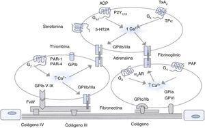 Mecanismos envolvidos na ativação e na adesão plaquetária à camada subendotelial. Fator de Von Willebrand (FvW), colágeno e proteínas se ligam aos receptores de glicoproteínas (GP) de membrana, que garante estabilidade com a matriz subendotelial pela interação com o colágeno. A ativação e agregação plaquetária são desencadeadas por trombina, mediadores endógenos liberados de grânulos de armazenamento, fator de ativação de plaquetas (PAF) e tromboxano A2 (TxA2). Aar, Receptor α2 Adrenérgico; ADP, Difosfato de Adenosina; 5‐HT2A, Serotonina (5‐Hidroxitriptamina)‐2A; PAR‐1, Receptor Ativado por Protease do tipo 1; PAR‐4, Receptor Ativado por Protease do tipo 4; P2Y12, Receptor p2y Purinérgicos; TPα, Receptor α Tromboxano. Fonte: Adaptado de Anfossi e cols. Nascimento JCR, Reis NMGT. Coagulação do sangue e coagulopatias. Em: James Manica. Anestesiologia, 4ª ed. Porto Alegre (RGS): Artmed Editora, 2018;547.