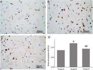 Comparação dos níveis de apoptose nos neurônios da medula espinhal de ratos. (A, B e C) mostram alterações apoptóticas (seta preta) nos neurônios da medula espinhal dos ratos, conforme medido por coloração TUNEL (ampliação, 400×). (D) mostra a comparação quantitativa dos níveis de apoptose. M.O.D. (do inglês Mean Optical Density), Densidade Óptica Média; a, p < 0,05 em comparação com o GrupoA; b, p < 0,05 em comparação com o GrupoB.
