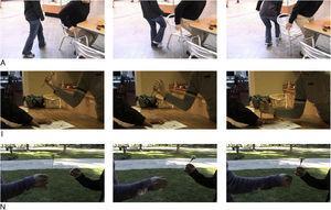 Un ejemplo por cada secuencia presentada. A:dolor por acción accidental; I:dolor acción intencionada; N: situación neutra.