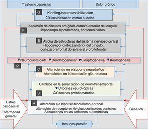 El estrés, la enfermedad general y los factores genéticos son el terreno en el cual se desencadenan los procesos que confluyen en manifestaciones clínicas de depresión, ansiedad, dolor e insomnio. Se inician con alteraciones autonómicas y en el eje neuroendocrino (A) que desencadenan cambios neuroquímicos (B) y en el soporte trófico (C), lo cual genera alteraciones microestructurales (D) y posteriormente macroestructurales (E) y funcionales (F), con lo que se establece un complejo patológico (G) que puede ser común a las 4 manifestaciones clínicas. Obsérvese la perpetuación del fenómeno psicopatológico por la influencia de (F) en (A) (líneas dobles rojas).