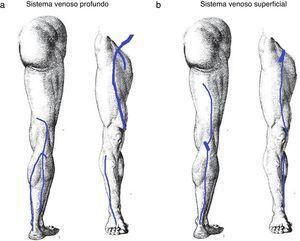 Representación del sistema venoso (a) profundo y (b) superficial para el informe.
