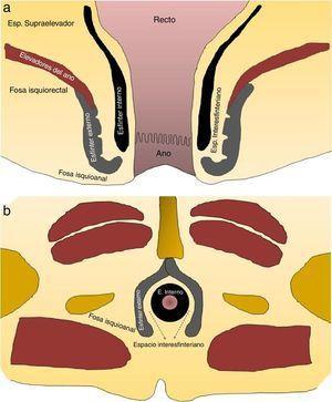 (a y b) Esquemas de la anatomía del esfínter anal y los espacios perirrectales.