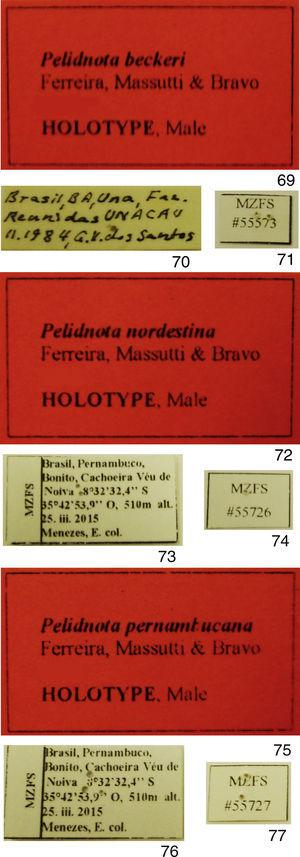 Labels attached to the hotypes. 69–71, Pelidnota beckeri sp. nov.; 72–74, P. nordestina sp. nov.; 75–77, P. pernambucana sp. nov.