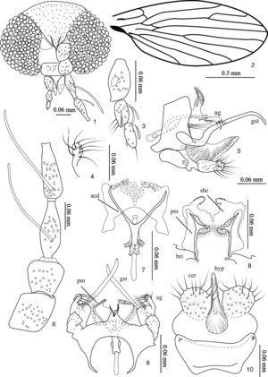 Trichomyia lamasi sp. nov. 1. Head&#59; 2. Left wing&#59; 3. Palpus&#59; 4. Arm of gonocoxite&#59; 5. Male terminalia, lateral&#59; 6. Scape, pedicel and basal flagellomeres&#59; 7. Aedeagus and parameres, dorsal&#59; 8. Parameres, ventral view&#59; 9. Male terminalia, dorsal&#59; 10. Cerci, epandrium and hypropoct (abbreviations: aed=aedeagus, ag=arm of gonocoxite, bri=gonocoxal bridge, cer=cercus, gst=gonostylus, hyp=hypoproct, pm=paramere, she=parameral sheath).