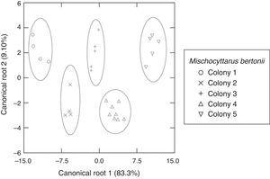Scatter diagram of the discriminant analysis results, showing the two canonical roots for differentiation of 5 colonies of Mischocyttarus bertonii, based on the relative areas (percentages) of the cuticular compounds of females, obtained by GC–MS.