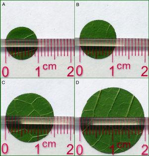 Mulberry leaf size standards of different larval stages for the IIM. (A) Leaf size for second-instar larvae. (B) Leaf size for third-instar larvae. (C) Leaf size for fourth-instar larvae. (D) Leaf size for fifth-instar larvae.