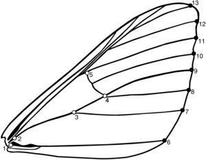 Benítez et al. (2015), representation of the 13 morphological landmarks identified in the forewings of Macaria mirthae.