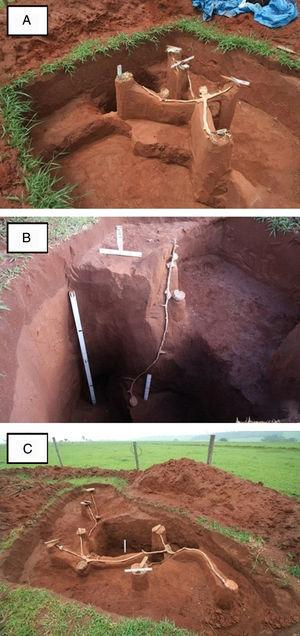 Details of the internal architecture of Atta bisphaerica nests, with approximate age of 14 months (A), 18 months (B) and 28 months (C). Botucatu, SP, 2014.