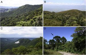 (A and B) Habitat of Actinote mantiqueira sp. nov.; (C and D) Habitat of Actinote alalia. (A) General view of the montane forests in Campos do Jordão, São Paulo State (1400–1600m a.s.l.); (B) region of contact between grassland and high altitude forest, Pico do Itapeva, Pindamonhangaba, São Paulo State (1800m a.s.l.); (C) general view of the montane forests in São Francisco de Paula, Rio Grande do Sul State (900–1100m a.s.l.); (D) close view of the montane forest in São Francisco de Paula, Rio Grande do Sul State (900m a.s.l.); the characteristic Araucaria trees are visible near the trail (black arrow).