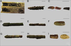 Photographs of nests from the three Megachile species: (A)–(C) M. brasiliensis&#59; (D)–(F) M. sejuncta&#59; (G)–(I) M. stilbonotaspis. Nests A, D and G were collected at SA, whereas nests B, E and H were collected at APABM. Scale bar=1cm.