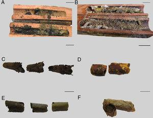 Brood cells of Megachile species: (A) nest supersedure of Tetrapedia rugulosa over a Megachile brasiliensis nest&#59; (B) cavity sharing by M. brasiliensis and a unidentified species of Centris&#59; (C) unattached cells of M. brasiliensis&#59; (D) normal and big-sized cell of M. brasiliensis&#59; (E) M. sejuncta brood cells&#59; (F) M. stilbonotaspis brood cells. Scale bar=1cm.