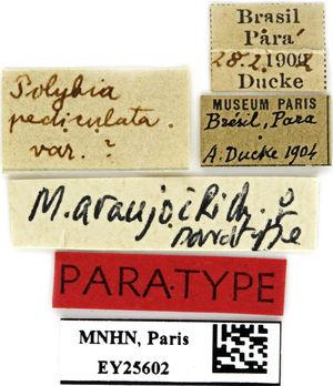 Labels found attached to the specimen.