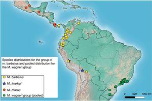 Partial truncated map for Central and South America with species distributions for the M. barbatus group, and with the pooled distribution of the group of M. wagneri (see next figure for detailed representation of distributions of species of this group).