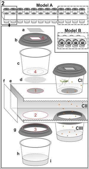 Building schemes for the autofeeders. 1. Used material, measurements and quantities. 2. Assembling. Bottom panel corresponds to an exploded view drawing of the Model A, with mantises' cups on the top. The top right detail is for Model B, with mantises' cups installed laterally, thus holding twice as many cups. CI, first compartment, the rearing chamber, showing a 4th instar, 2.0cm long Photina sp. (to scale); CII, central or circulation compartment; CIII, third compartment, the prey cup; a, square piece of Tulle fabric with mesh size of 0.3mm; b, Lid with a square hole (5) in the center; c, translucent mantis cup, with circular hole (4) on the bottom; d, circular piece of Tulle fabric with mesh size of 2.0mm; e, rectangular PVC pipe with circular holes on the top side (1) and bottom side (2) [serrations on the side is only an effect to show inside the pipe, and is not meant to be carved on pipe!]; f, translucent plastic sheet; g, lid with circular hole (3) on center; h, translucent prey cup; i, culture medium for Drosophila Fallén, 1832. The connections between components a+b, c+d+e, e+f and e+g are fixed with PVC adhesive and sealed with thermoplastic adhesive (glue gun). The small orange dots represent drosophila flies, indicating that they must circulate freely between CI, CII and CIII.