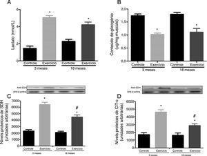 Efeitos do exercício físico agudo sobre os níveis de lacato sanguíneo (A), conteúdo do glicogênio (B), nível da succinato desidrogenase (C) e atividade da citocromo c oxidase (D) no gastrocnêmio de ratos Wistar com de três e 18 meses. Os dados foram expressos como média ± erro padrão da média. Um p ≤ 0,05 foi considerado estatisticamente diferente ao comparar os animais exercitados aos respectivos controles (*) e aos animais exercitados de três meses (#). Foi usada a Anova, seguida pelo teste post hoc de Tukey.