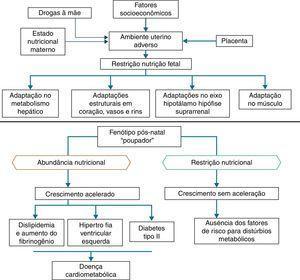 Hipótese do fenótipo poupador e da resposta adaptativa preditiva.