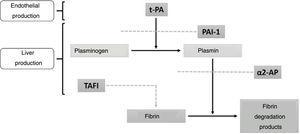 Physiological activators and inhibitors of fibrinolysis. Tissue plasminogen activator (t-PA); Plasminogen Activator Inhibitor 1 (PAI-1); α2-antiplasmin (α2-AP); Thrombin-activatable Fibrinolysis Inhibitor (TAFI).