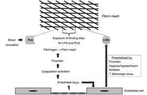 Early events of coagulation and fibrinolysis. Plasminogen (PLG); Tissue plasminogen activator (t-PA).