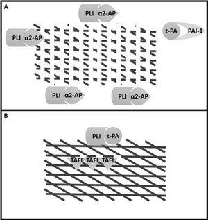 Control of fibrinolysis by inhibitors' action after detachment of t-PA and plasmin from the fibrin mesh surface. A: After completing the fibrin mesh breakdown, plasmin and t-PA are released into the surrounding plasma, where they are captured by their inhibitors (α2-AP and PAI-1, respectively). B: Although it does not restore the fibrin fragmented points, TAFI removes the newly exposed lysine residues, preventing additional plasminogen molecules from binding and intensifying fibrinolysis and blocking the positive feedback described previously. Plasmin (PLI); Tissue plasminogen activator (t-PA); Plasminogen Activator Inhibitor 1 (PAI-1); α2-antiplasmin (α2-AP); Thrombin-Activatable Fibrinolysis Inhibitor (TAFI).