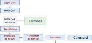 Síntesis del colesterol y sitio de acción de las estatinas.