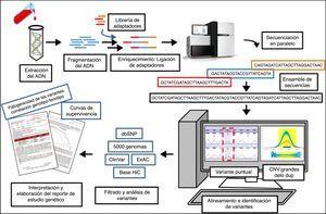 Proceso de secuenciación del ADN mediante secuenciación masiva (NGS) y gestión de la información. De una muestra de ADN se puede secuenciar parte o todo el genoma en un mismo ensayo. Este tipo de estudio genera una gran cantidad de información que requiere un análisis exhaustivo por un equipo multidisciplinar con el fin de lograr una adecuada interpretación de los datos. Este último proceso es importante para la elaboración de informes genéticos que sean de utilidad en la práctica clínica.