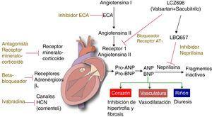 Medicamentos actuales para falla cardíaca Modificado de Lother y Hein2.