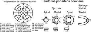 Segmentación del ventrículo izquierdo y territorios por arteria coronaria. Fuente: Cerqueira et al., Circulation. 2002&#59;105(4):539-425.