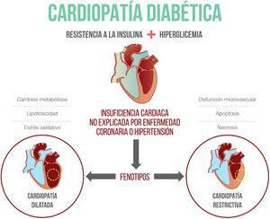 Fisiopatología de la cardiopatía diabética.