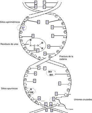 Representación esquemática de los principales radioproductos.